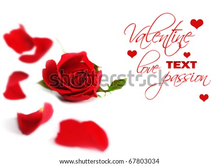 Happy Valentine red rose border, fresh flower with petals isolated on white background