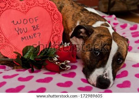 Happy Valentine's Day - stock photo