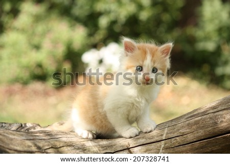 Happy white red kitten resting on the tree stump