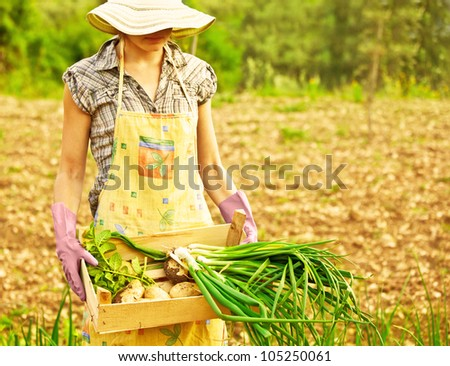 Happy woman gardener working on field, young female holding chest, girl growing organic green vegetables and fruits, summer garden, rural leisure outdoor, lady farmer, potato and onion harvest season - stock photo