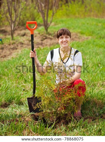 Happy woman planting thuja outdoor in spring - stock photo