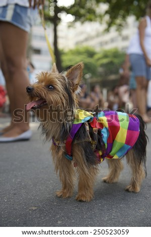 Happy Yorkshire terrier wearing bright rainbow of colors for the Rio Blocao Animal Carnival parade for dogs
