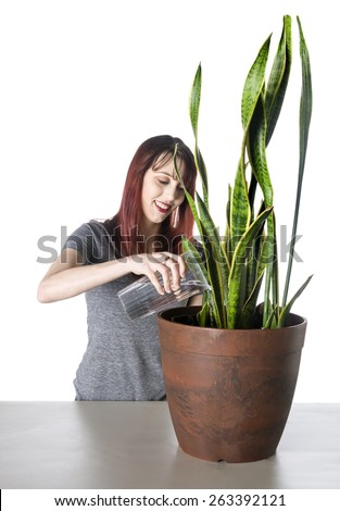 Happy Young Attractive Woman Watering a Green Plant in a Pot on Top of the Table, Isolated on White Background.