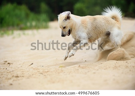 happy young dog digging on beach
