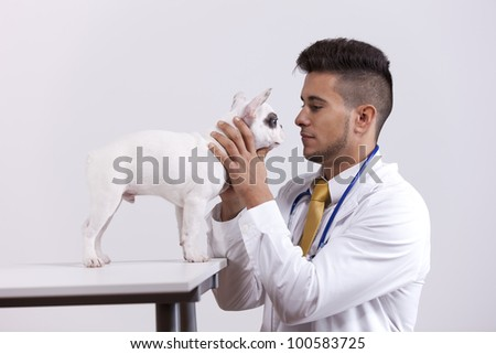 Happy young vet holding a Boston Terrier dog - stock photo