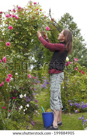 Happy young woman cuts some roses in the garden - stock photo