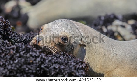 Harbor seal, 17 Mile Drive, Monterey, California, USA