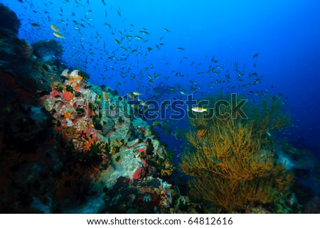 Hard coral and soft coral underwater - stock photo