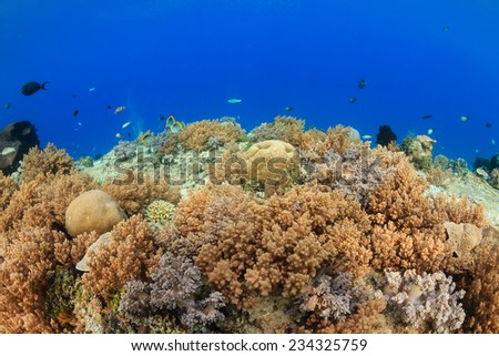 Hard coral, soft coral and fish on a colorful tropical coral reef - stock photo