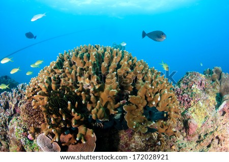 Hard corals and tropical fish - stock photo