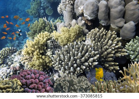 Hard corals and Tropical fish in the Red Sea, Egypt