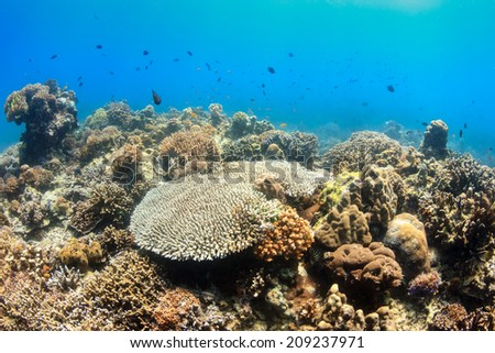 Hard corals and tropical fish on a reef - stock photo