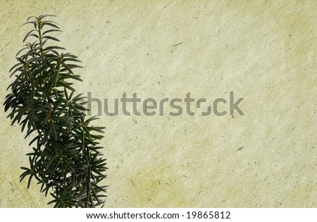 Hard cracked paper background with old painting and evergreen twig. - stock photo