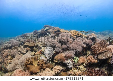 Hard, soft corals and tropical fish swim around a shallow water reef - stock photo