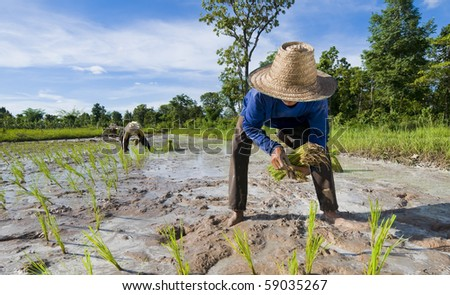 hard working father and son out in the rice fields. shot up country in the isaan, the north of thailand.