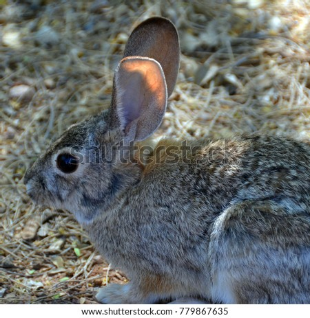 the rabbits belonging We have had 4 rabbits in weymouth die of viral haemorrhagic disease  in  weymouth have been confirmed as vhd2, all rabbits belonging to.
