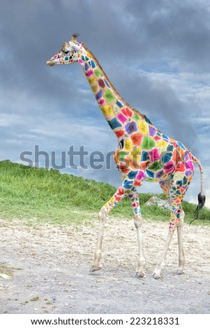 Harlequin multi color Giraffe portrait on deep blue sky background - stock photo