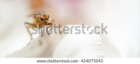 Harmful insect parasite on white petal closeup. - stock photo