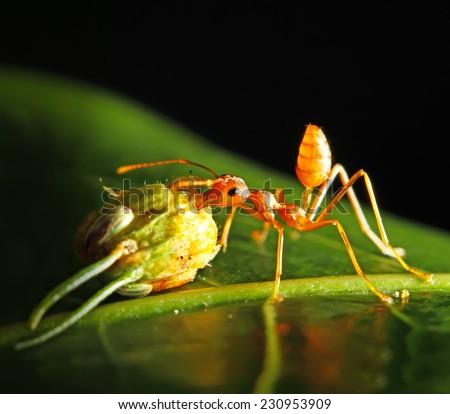 harmonious  ant  - stock photo