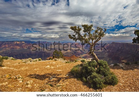 Harmonious landscape of tree and sky at Arizona's Grand Canyon National Park.  Location is along Desert View Drive at Navajo Point.