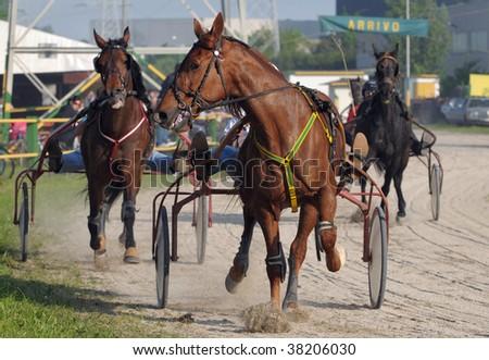 Harness racing: Final rush (ARRIVO is the italian word for FINISH) - stock photo
