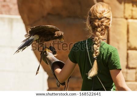 Harris hawk on falconer's hand - stock photo