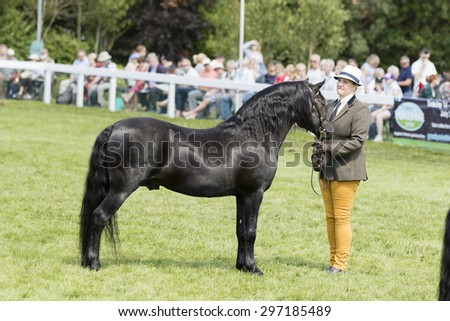 Harrogate, North Yorkshire, UK. 15th July, Judging Horses at the Great Yorkshire Show 15th July, 2015 at Harrogate in North Yorkshire,  England