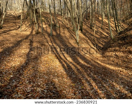harsh shadows on the background of fallen leaves in autumn forest - stock photo