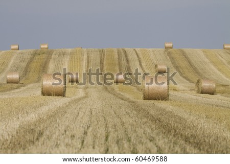 harvest - stock photo