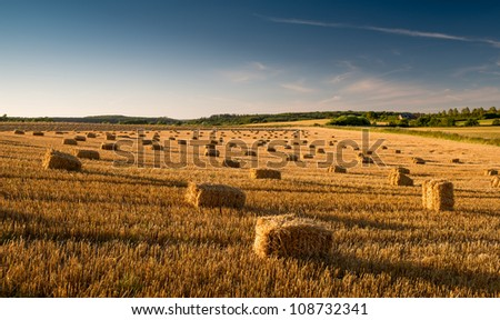 Harvest - a countryside photo in early sunset - stock photo