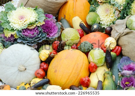 harvest, autumn vegetables, eggplant, peppers, cabbage, zucchini, squash, pumpkin