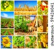 Harvest concept collage with a gardener working on the field - stock photo