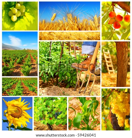 Harvest concept collage with a gardener working on the field