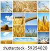 Harvest concepts - stock photo