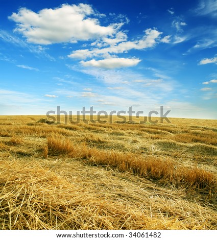 harvest field of wheat and cloudy sky - stock photo