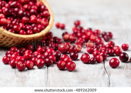 Harvest fresh red cranberries in wicker basket, selective focus. Autumn concept