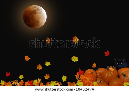 harvest moon, black cat and pumpkins