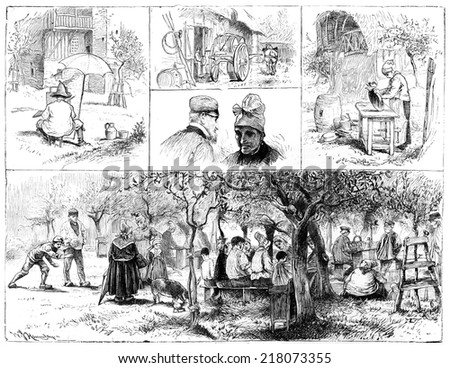 Harvest Normandy cider. Types and tables, vintage engraved illustration. Journal des Voyage, Travel Journal, (1880-81).