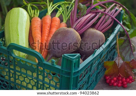 Harvest of fresh vegetables in a green box in the garden - stock photo