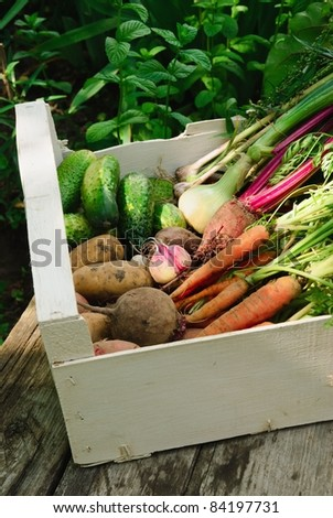 Harvest of fresh vegetables in white box in the garden