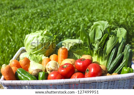 Harvest of vegetables - stock photo