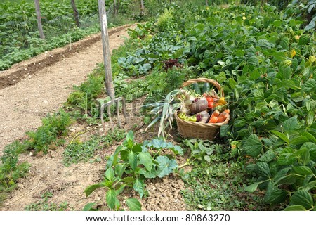 harvest of vegetables and fresh produce garden - stock photo