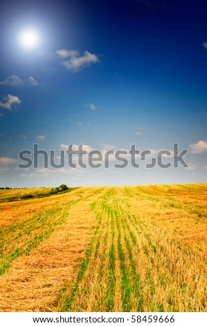 Harvest of wheat and stubble by summertime.