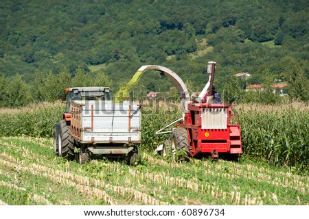 Harvest on a corn field on a sunny day in early autumn - stock photo