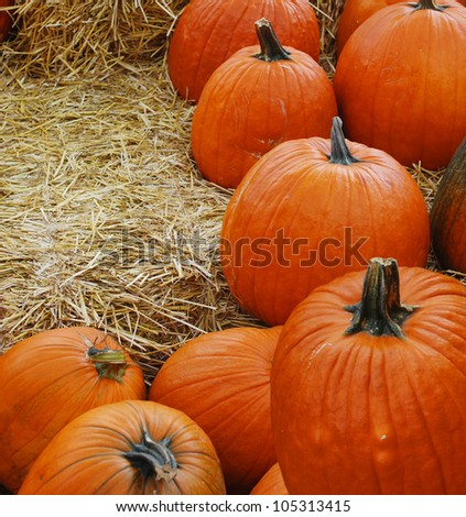 Harvest pumpkin background - stock photo
