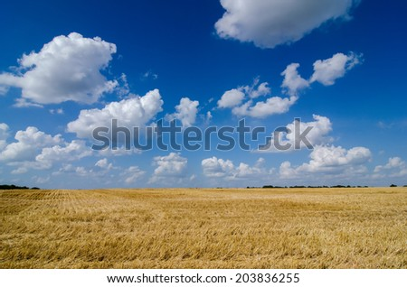 harvest ready farm field - stock photo