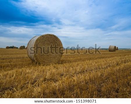 Harvest season - stock photo