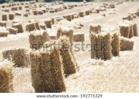 Harvest time in Poland - cube of straw - stock photo