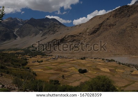 Harvest time in the Suru Valley - stock photo