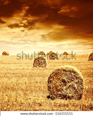 Harvest time of wheat, beautiful sunset, scenic landscape, golden rye field with haystack, season of crop, farm producing food, cultivated organic seeds of bread, beauty of nature in autumn - stock photo
